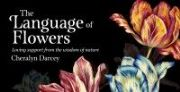 Language of Flowers Mini Cards - Cheralyn Darcey